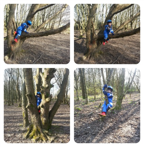 Fifty Things - Tree Climbing