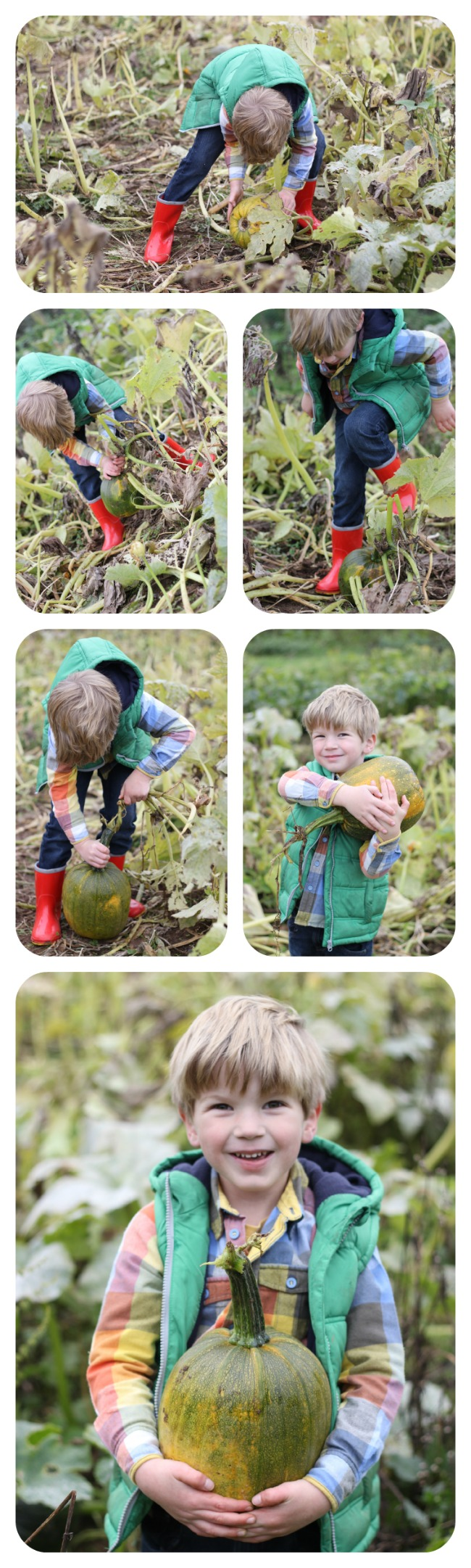 Pumpkin Picking 2014
