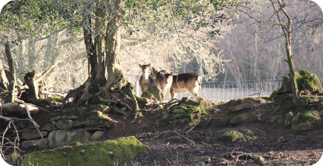 Deer woods at Coombe Mill
