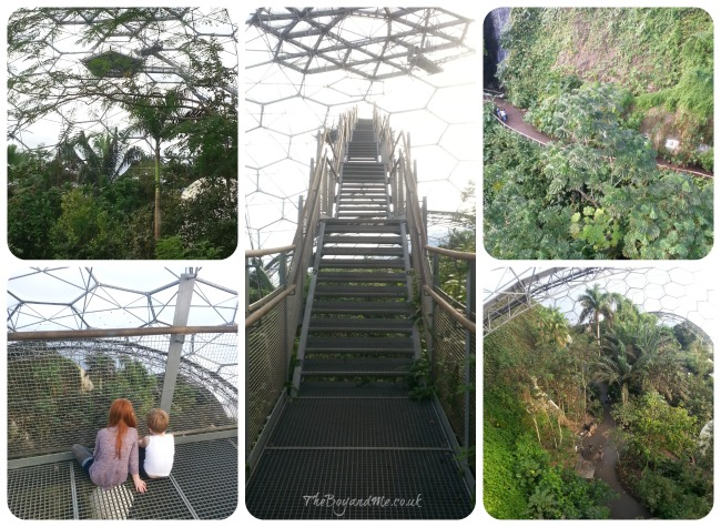 Rainforest Lookout Canopy Platform